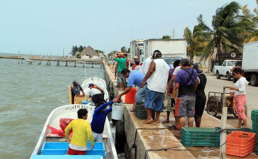 Ya está próxima a concluir la temporada de captura de la preciada especie en Yucatán. (SIPSE)