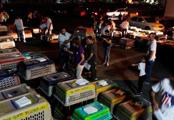 Las mascotas fueron llevadas a Estados Unidos como parte de una operación organizada por defensores de animales. (Vanguardia)