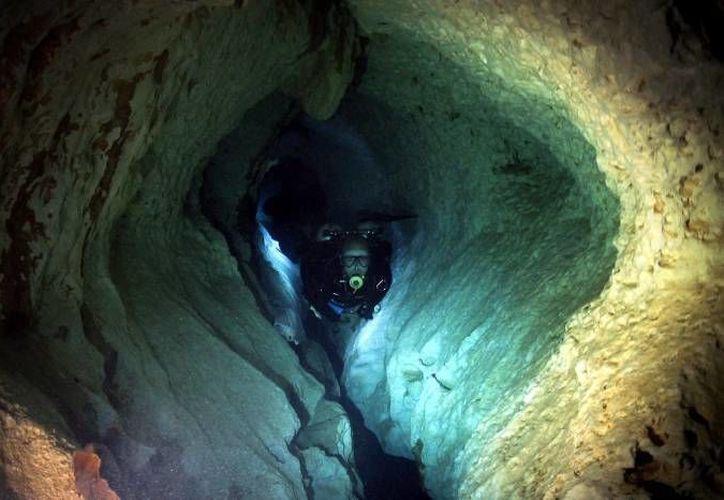 El ejemplar fue encontrado en una cueva ubicada entre Tulum y Xel-Ha. (Redacción/SIPSE)
