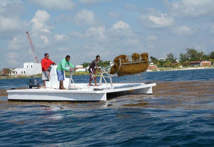 El proyecto se aplicará en los 670 metros de costa de Puerto Morelos. (Luis Soto/SIPSE)