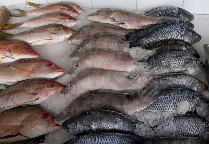En el municipio de Benito Juárez hay un padrón de mil 695 establecimientos de pescados y mariscos. (Redacción/SIPSE)