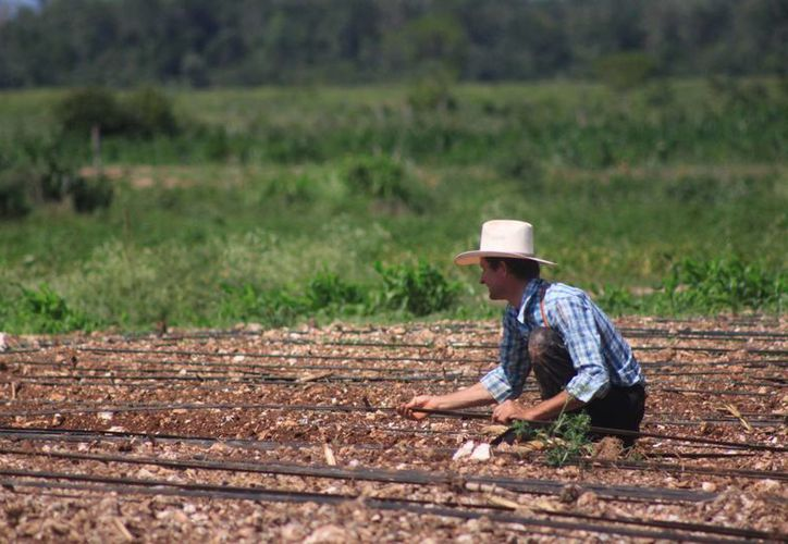 El Inaes invita a todos los ciudadanos, principalmente del sector agropecuario y que deseen emprender algún micronegocio con un valor agregado a su producción, a que se acerquen a la institución. (Harold Alcocer/SIPSE)