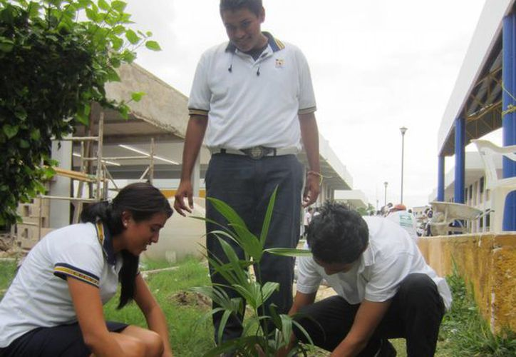 Una de las finalidades de Plant for the planet es que en cada municipio se comience a plantar árboles. (Tomás Álvarez/SIPSE)