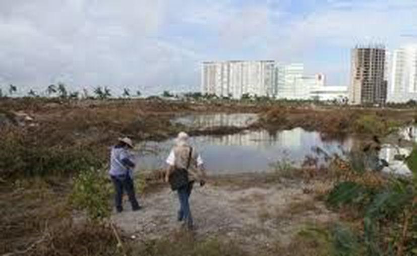 Recorrido de personal de la Profepa en predios de Malecón Tajamar. (Redacción)