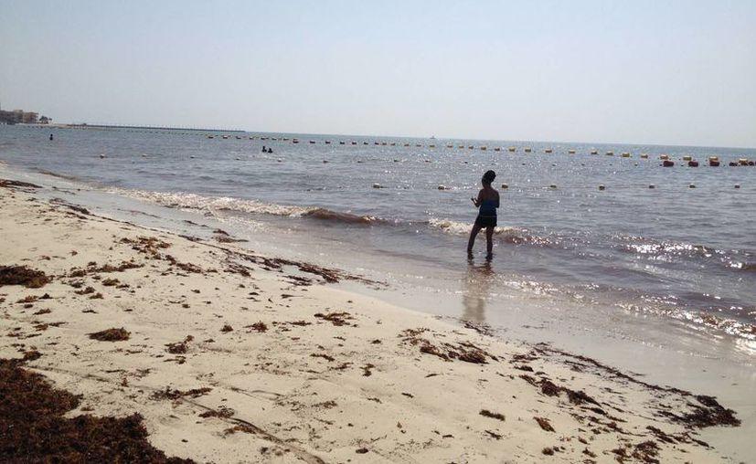 Los encargados de atender negocios turísticos lamentan la poca afluencia que hay en las playas del centro. (Adrián Barreto/SIPSE)