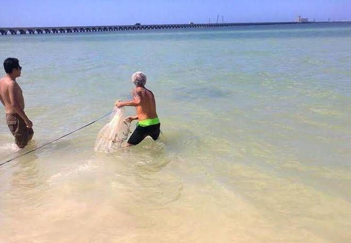 No faltó quien sacara una tarraya para atrapar alguna de las mantarrayas que recalaron en la playa del malecón en Progreso. (Óscar Pérez/SIPSE)