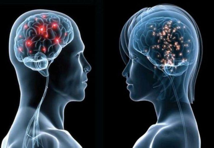 Investigadores de la Universidad de Tel-Aviv realizaron un estudio a  mil 400 cerebros y determinaron que no existe diferencias en la estructura general dependiendo del género de la persona. (elnuevodiario.com)