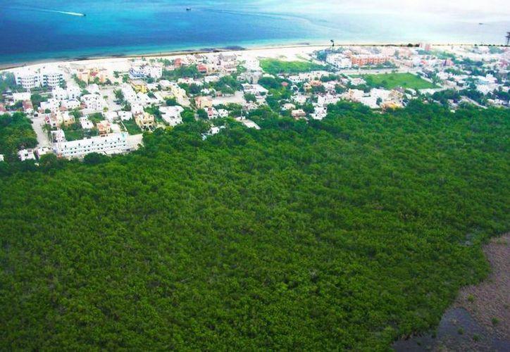 La Semarnat rechazó proyectos hoteleros en Puerto Morelos, Puerto Aventuras e Isla Mujeres y de un planta de concreto en Playa del Carmen, por no cumplir con las normas de equilibrio ecológico. (Archivo)