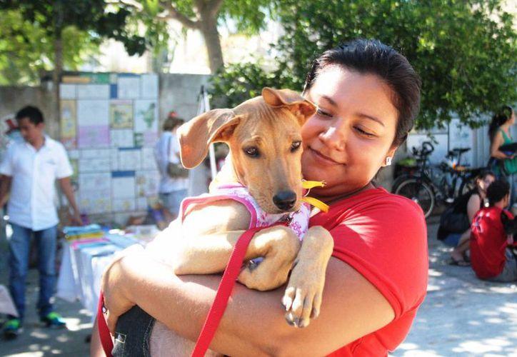 Este domingo se realizará la feria 'Mi amigo de la calle' en Playa del Carmen. (Octavio Martínez/SIPSE)