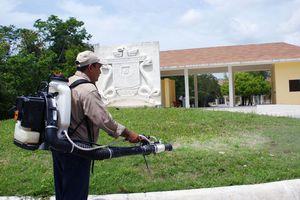 Frenan el ataque de mosquitos en Cozumel
