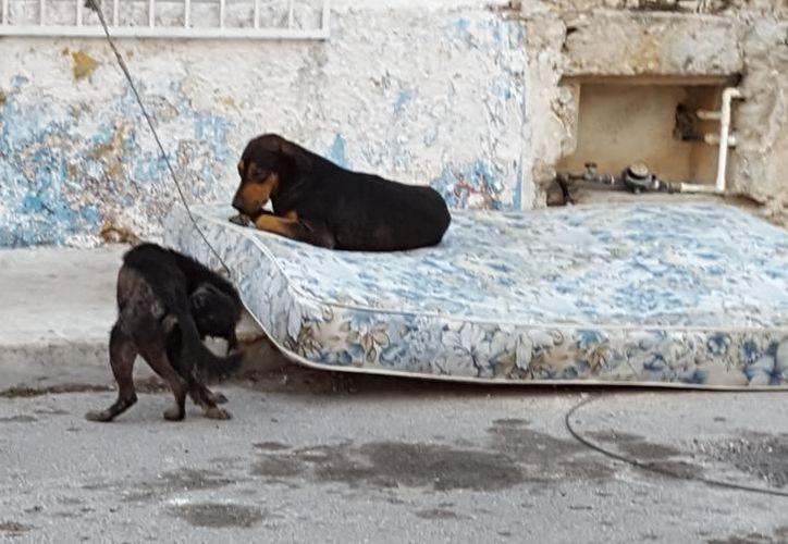 El Ayuntamiento de Progreso impulsará diversas acciones a favor de los animales luego del escándalo de los días anteriores. (Archivo/ Milenio Novedades)