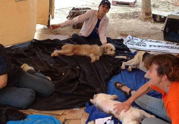 Perros recién esterilizados en el área de recuperación. (David Pompeyo/SIPSE)