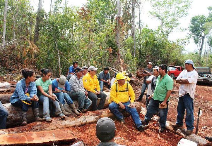 La campaña de prevención de incendios en Quintana Roo dio buenos resultados, por lo que se logró un ahorro presupuestal. (Edgardo Rodríguez/SIPSE)