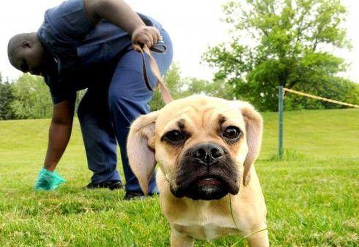 En Seattle, en el estado de Washington, hay un 50 por ciento más de perros que de niños. (Archivo/AP)