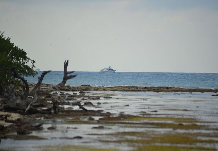 El Parque Marino Arrecifes de Cozumel llamó la atención de la Comisión Europea por su resiliencia a la masiva llegada de cruceros. (Foto: Gustavo Villegas/SIPSE)