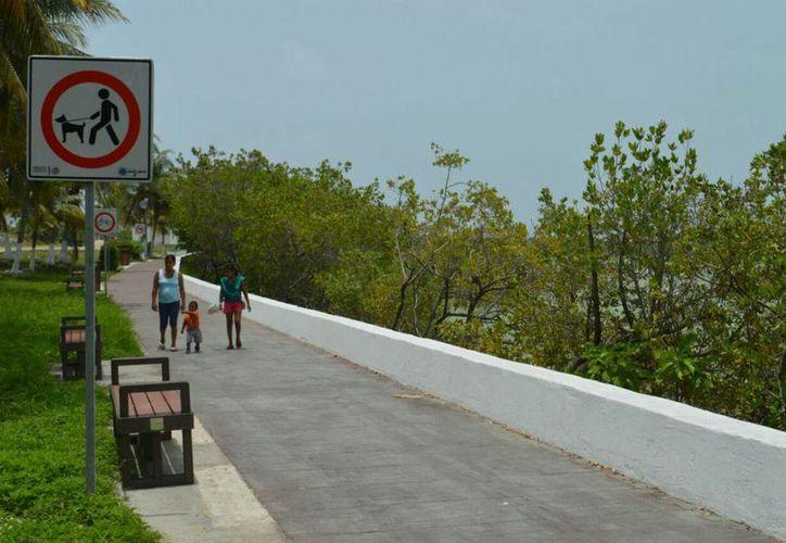 En la ciclovía fueron invertidos un millón 400 mil pesos. (Cortesía)