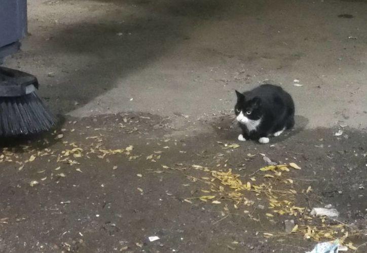 Sylvester, un gato cimarrón, espera en una zona de carga en el Cdentro de Convenciones Jacob Javits en Nueva York. (AP/Verena Dobnik)