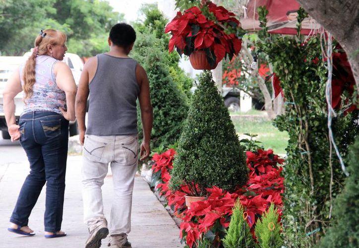 La venta de pinos para esta época decembrina comenzó en el estado desde finales de noviembre. Ante esto la Profepa realiza un operativo para inspeccionar todos los establecimientos que ofrezcan este servicio. (SIPSE)
