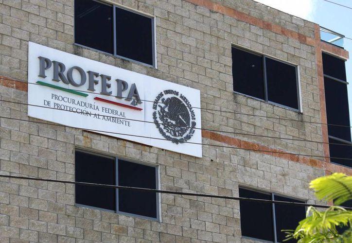 El programa nacional lo promueve la Procuraduría Federal de Protección al Ambiente. (Francisco Gálvez/SIPSE)