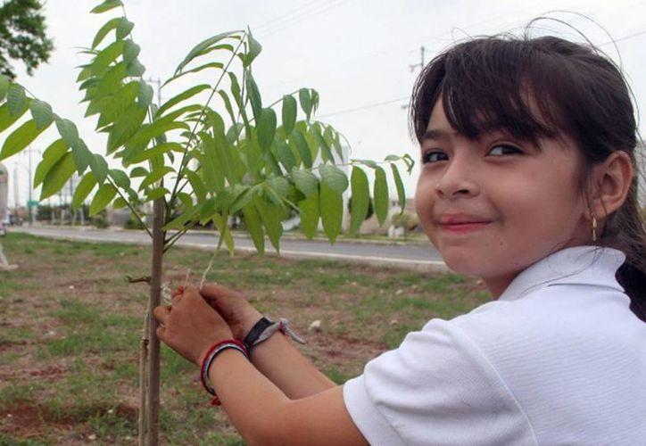 La campaña  '¡Festejemos al arbol!' finalizó con la siembra de 50 árboles  entre caobas, ciricotes, huanos, robles y balché. (Foto de contexto. Archivo/SIPSE)