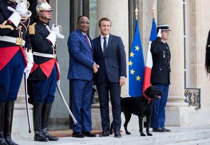 Siguiendo una tradición propia de los presidentes franceses, Emmanuel Macron adoptó  a Nemo. (Christophe Morin/Getty Images).