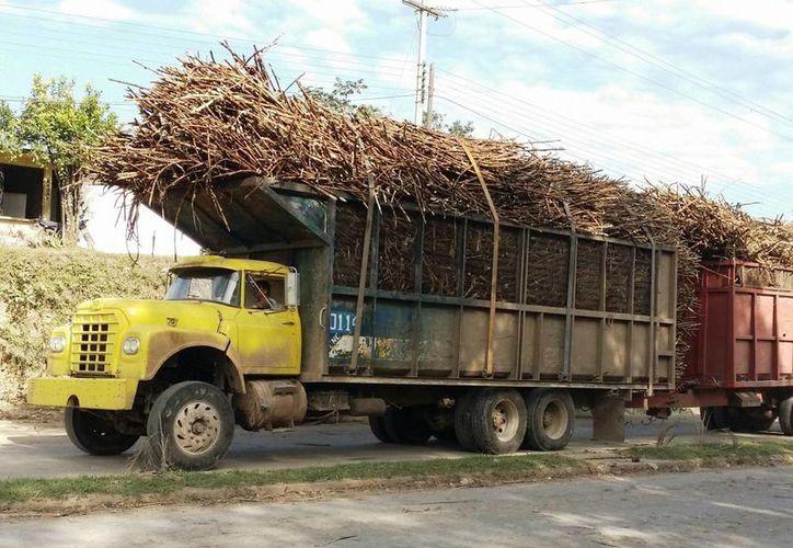 Durante las últimas 72 horas el ritmo de la producción de caña se ha mantenido constante en los 14 frentes de cosecha. (Edgardo Rodríguez/SIPSE)