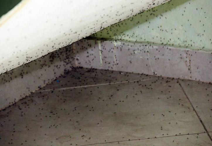 El objetivo es que se controle la excesiva cantidad de moscos en las zonas consideradas 'puntos rojos' de la entidad. (Milenio Novedades)