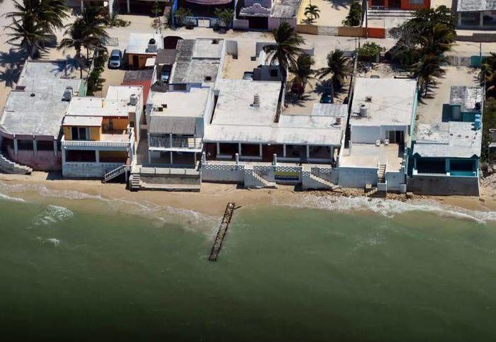 El litoral de Yucatán está libre de contaminantes dañinos para la fauna marina, según el Cripy. (SIPSE/Foto de contexto)