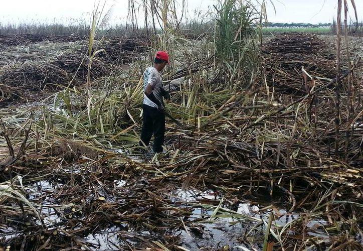 Las lluvias del viernes pusieron en alerta a los productores. (Edgardo Rodríguez/SIPSE)