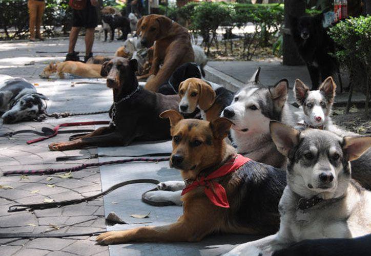México es el país de América Latina con el mayor número de perros en la región. (Contexto/Internet).