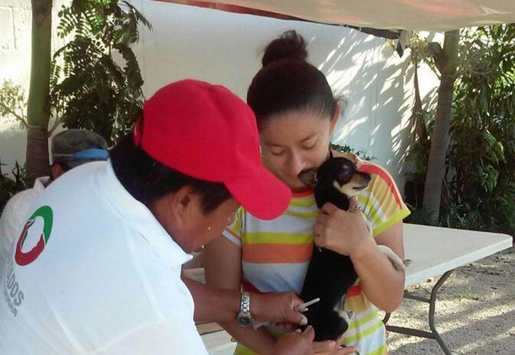 En el Centro de Atención Canina en Cancún se llevan a cabo la vacunación de las mascotas de 9 a 13 horas. (Redacción/SIPSE)