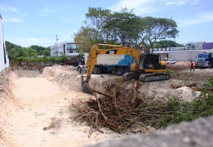 Ciudadanos se manifestaron en contra de la tala de árboles de gran tamaño sin un plan de reubicación, en Playa del Carmen. (Daniel Pacheco/SIPSE)