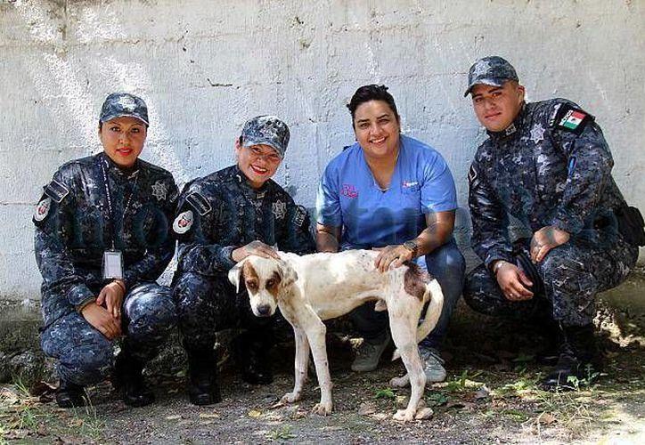 Los elementos acudieron al CAC para adoptar a un perro que los acompañe en sus actividades de vigilancia. (Redacción/SIPSE)