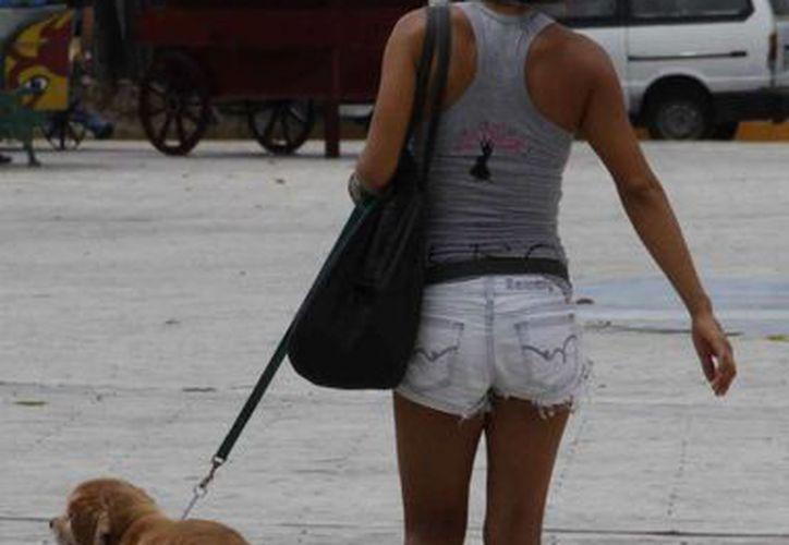 El caminar sobre el pavimento les ocasiona bochornos a las mascotas en la mayoría de los casos. (Tomás Álvarez/SIPSE)