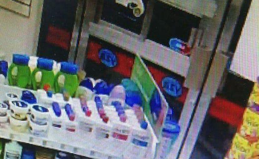 El robo a la farmacia quedó registrado en las cámaras de seguridad. (Redacción/SIPSE)