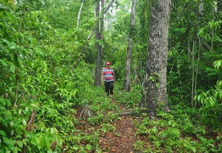 En el estado se impulsan diversos proyectos con base al aprovechamiento forestal sustentable. (Contexto/Internet)