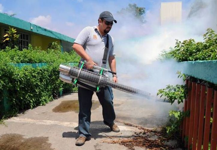 En la fase adulta la solución para erradicarlos es la nebulización y la termonebulización. (Redacción/SIPSE)