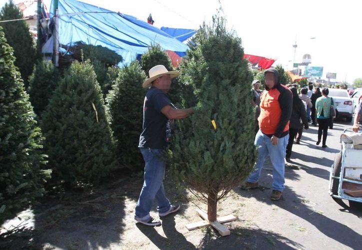 Desde principios de este mes, arribaron a Yucatán los primeros lotes de árboles de Navidad naturales provenientes del extranjero. Imagen de su venta en la puerta de un conocido supermercado. (Archivo/SIPSE)