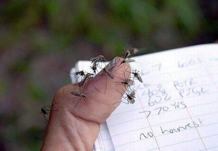 Hay personas que son más susceptibles que otras de ser picadas por mosquitos. (taringa.net)