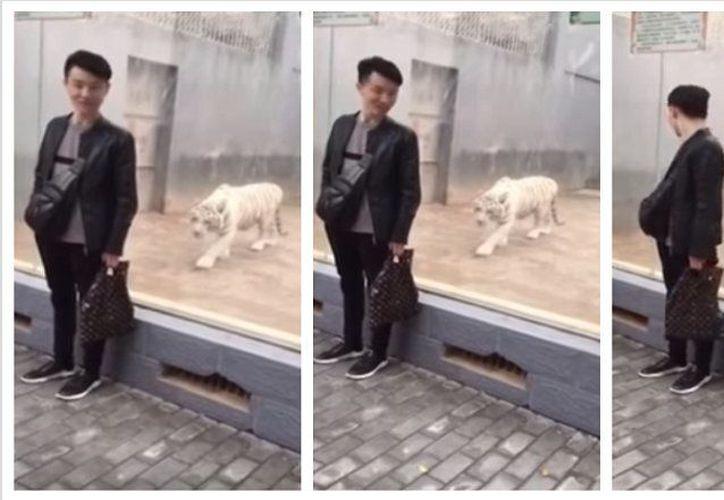 Un cristal de seguridad le permitió ver de cerca el peligro de dar la espalda a un felino de gran tamaño. (Foto: Contexto/Internet)