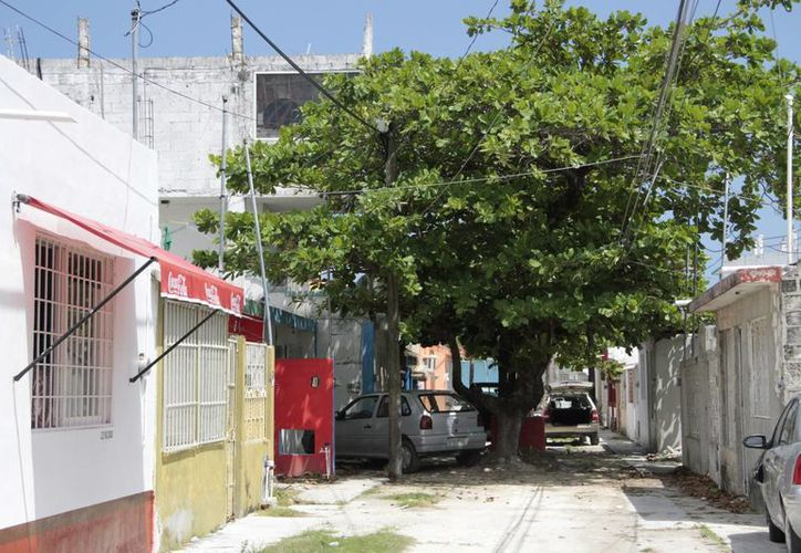 El permiso se otorga cuando existen árboles que dañan bienes inmuebles o ponen en riesgo a la población. (Tomás Álvarez/SIPSE)