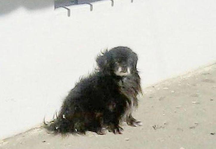 Calafate protagonizó en Argentina una historia similar a la del perro Hachiko en Japón. (clarin.com)