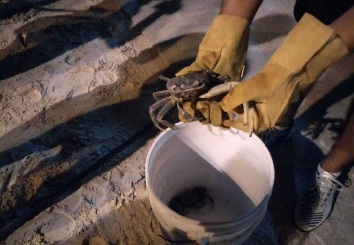 Los voluntarios deben llevar consigo una linterna, guantes de carnaza, una cubeta o recogedor, vestimenta de color blanco y repelente para mosquitos. (Tomás Álvarez/SIPSE)