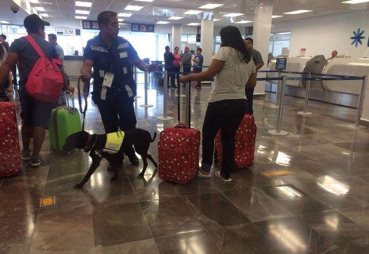 Trabajan 84 perros entrenados en el Centro Nacional de Adiestramiento y Desarrollo de la Unidad Canina. (Gerardo Amaro/SIPSE)