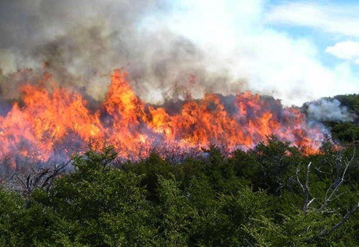 La Comisión Nacional Forestal se prepara ante la próxima temporada de incendios forestales. (Contexto/Internet)