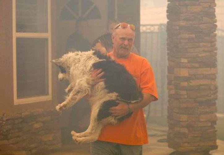 Imagen de un habitante de Los Angeles al sacar a su perro de su casa. (Reuters)