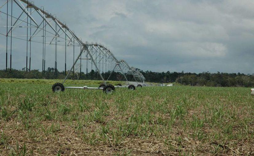 En Bacalar se apoyaron a seis productores con 260 hectáreas de riego. (Juan Rodríguez/ SIPSE)