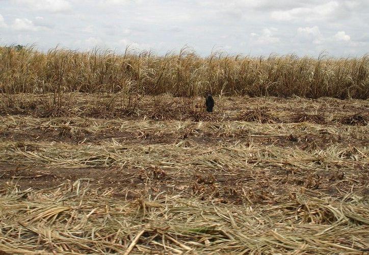 La escasez de lluvias provoca que la tierra no esté apta para realizar la siembra en tiempo. (Edgardo Rodríguez/SIPSE)