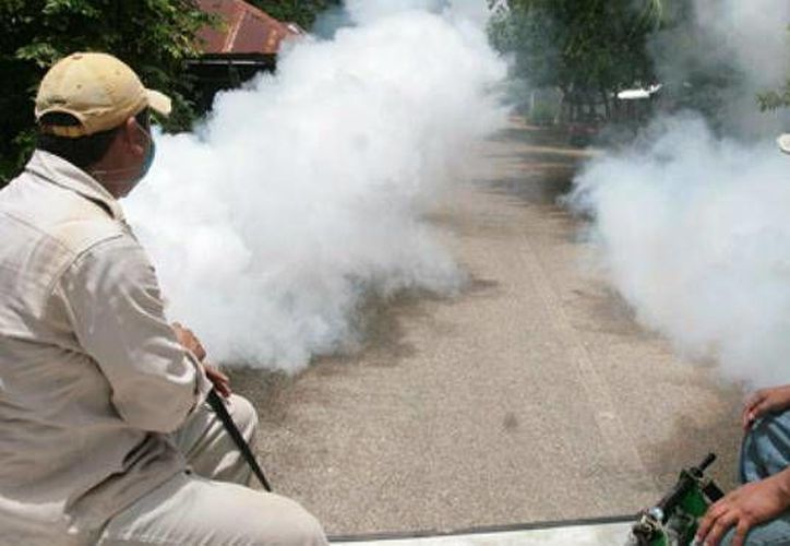 Fumigan para prevenir el brote del dengue por la temporada de lluvias. (Carlos Yabur/SIPSE)