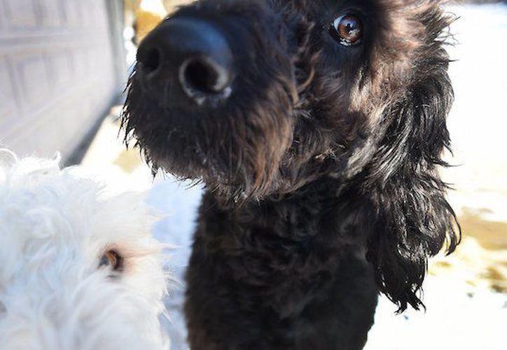 El propietario de los perros dijo que llevó a la mujer dentro de su casa, la cubrió con cobijas y llamó a la policía. (Sin Embargo)
